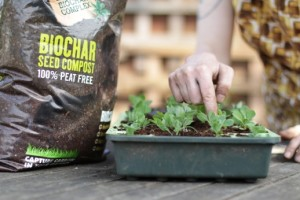 Sowing seeds with Carbon Gold compost