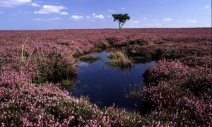 A peat bog in North Yorkshire