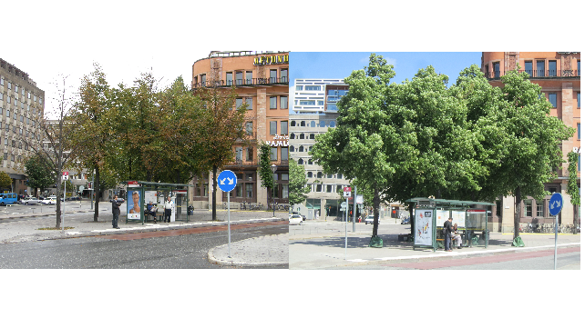 urban tree survival rates