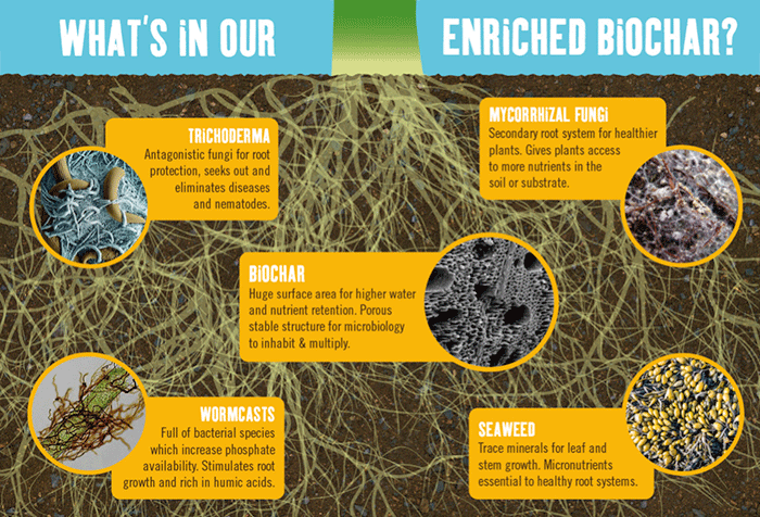 What's in our enriched biochar?