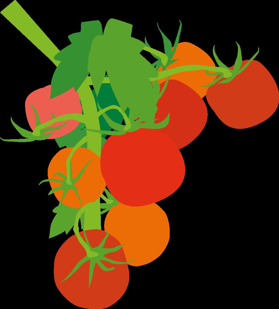 Tomatos-924x1024