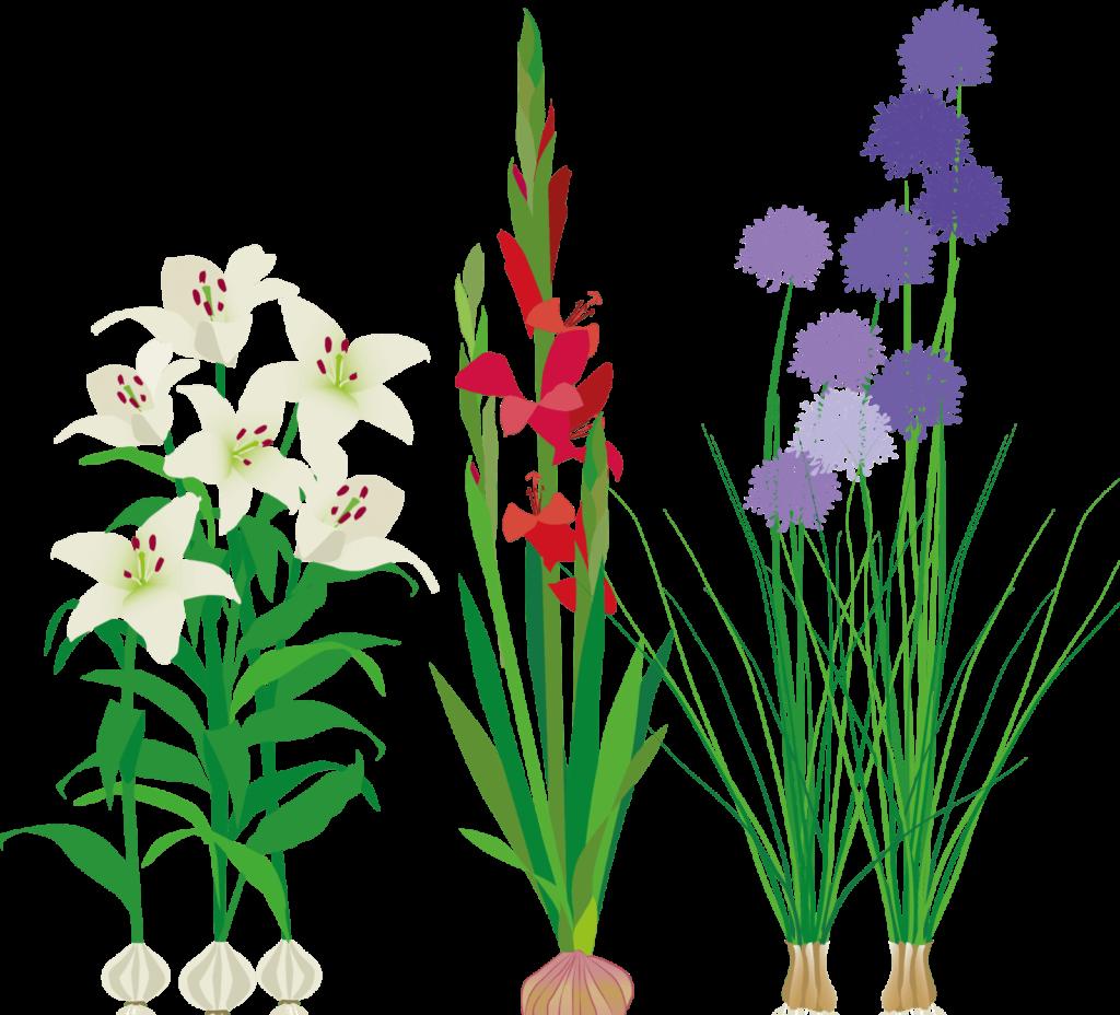 Flowers4-1-e1559552600446-1024x928